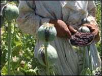 afghan opium production 'soars'