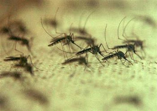 gates funds research into 'flying syringe' mosquitos for 'vaccines'