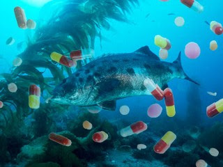 pharmaceuticals found in fish across US