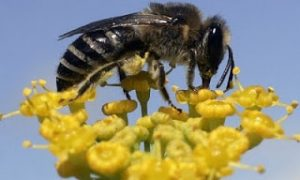 Study: Pollination Down With Bee Decline